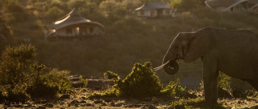 mahali-mzuri-elephant
